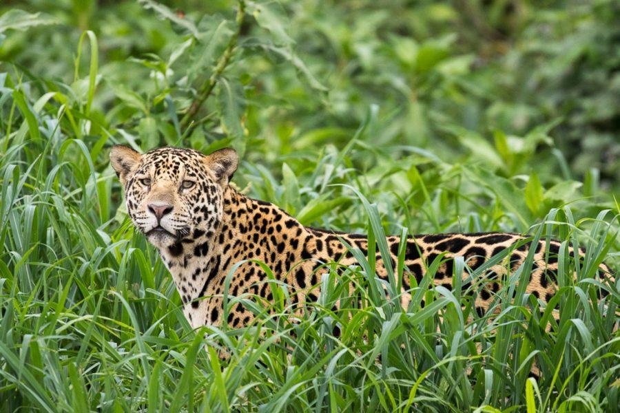 … Pantanal …
