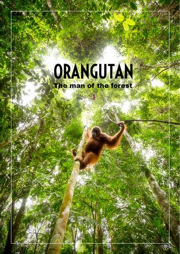 orangs-outan